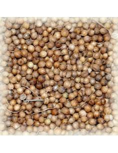 Coriandre semences