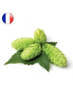 Houblon Tradition (FR) en Cône