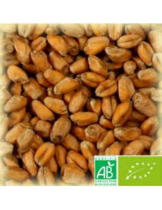 CHÂTEAU CARA WHEAT RUBY NATURE (CARA FROMENT BIO) 40-60 EBC