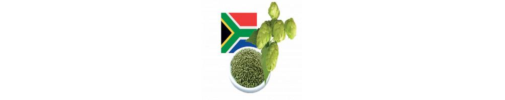 Achat Houblon Afrique du Sud